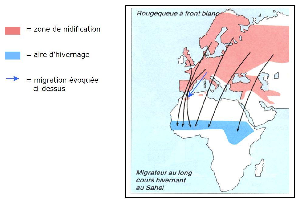 Voies migratoires du rougequeue à front blanc
