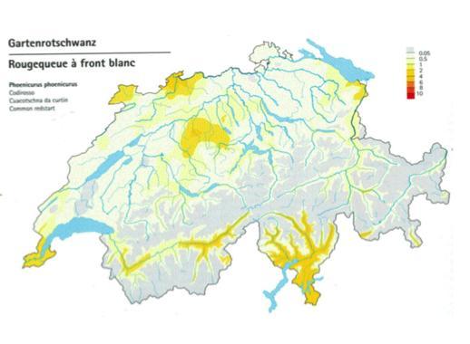 Carte de répartition du rougequeue à front blanc en Suisse