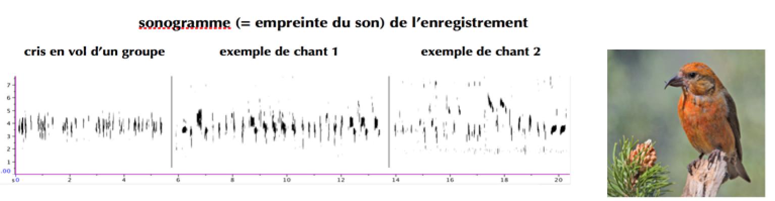 https://cdnfiles1.biolovision.net/www.gobg.ch/userfiles/sonagramme.png