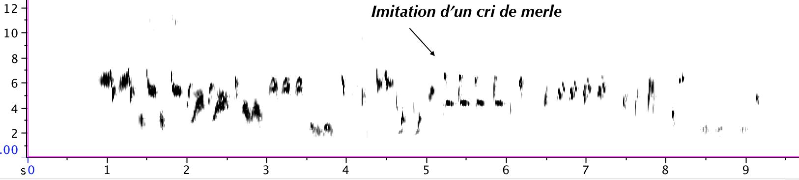 https://cdnfiles1.biolovision.net/www.gobg.ch/userfiles/sonagramme_1.png