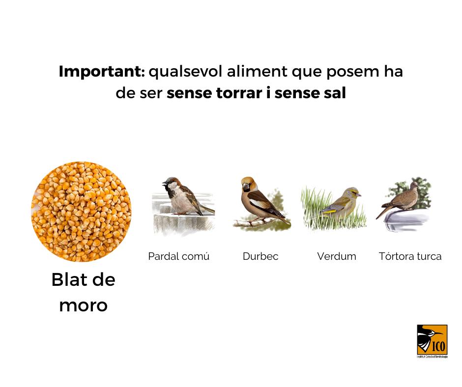 https://cdnfiles1.biolovision.net/www.ocellsdelsjardins.cat/userfiles/2aliment.png