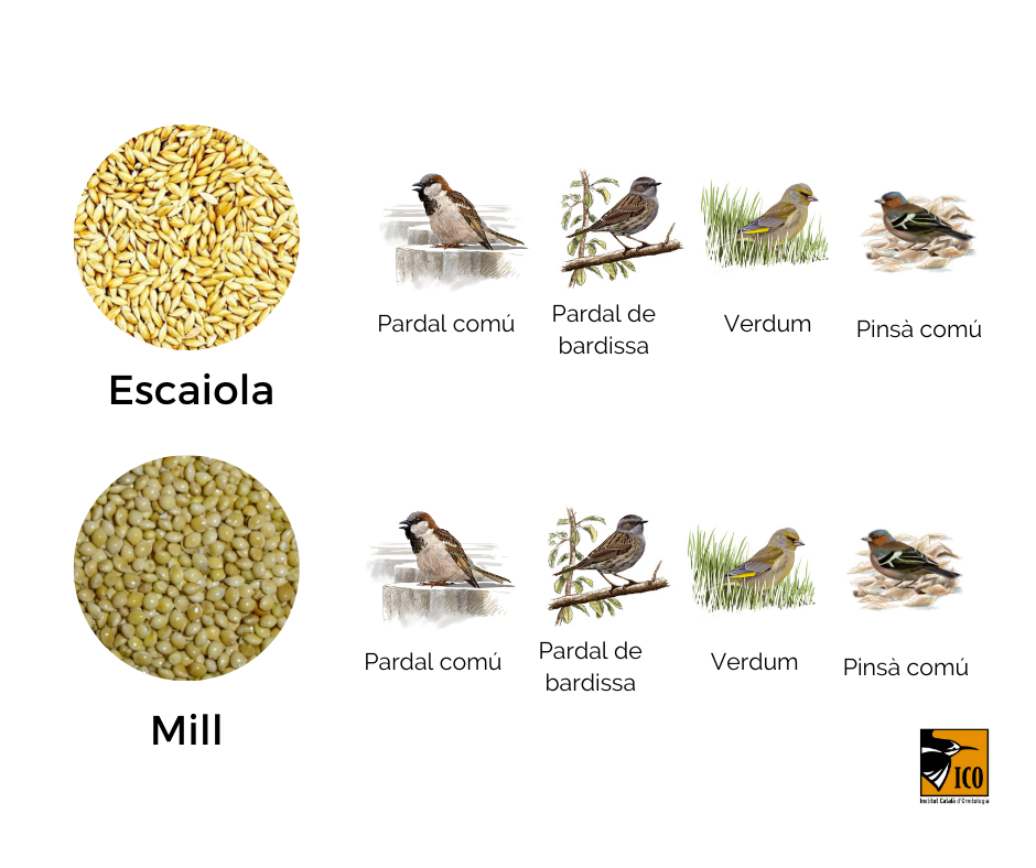 https://cdnfiles1.biolovision.net/www.ocellsdelsjardins.cat/userfiles/3aliment.png