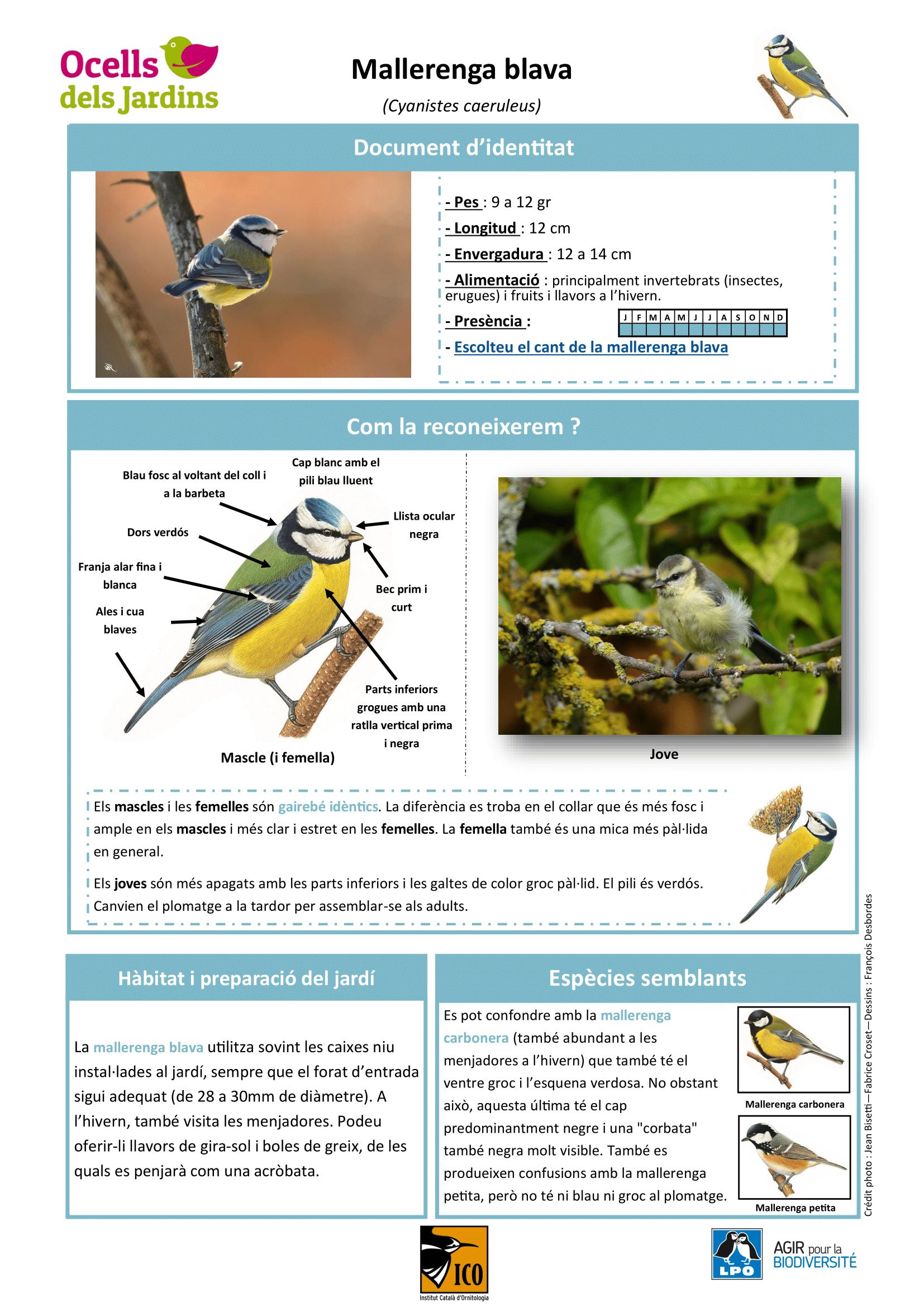https://cdnfiles1.biolovision.net/www.ocellsdelsjardins.cat/userfiles/Mallerengablava-1.png