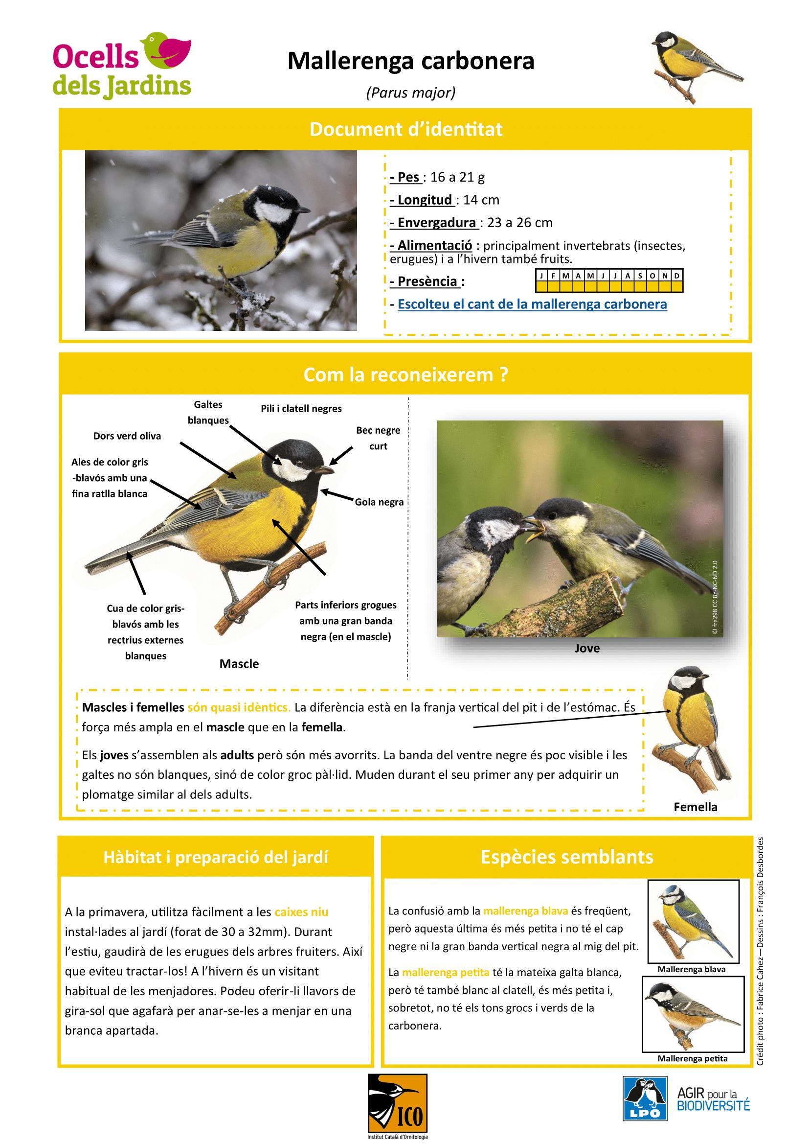 https://cdnfiles1.biolovision.net/www.ocellsdelsjardins.cat/userfiles/Mallerengacarbonera-1.png