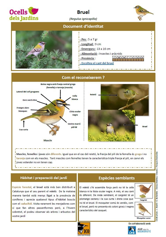 https://cdnfiles1.biolovision.net/www.ocellsdelsjardins.cat/userfiles/bruel.jpg