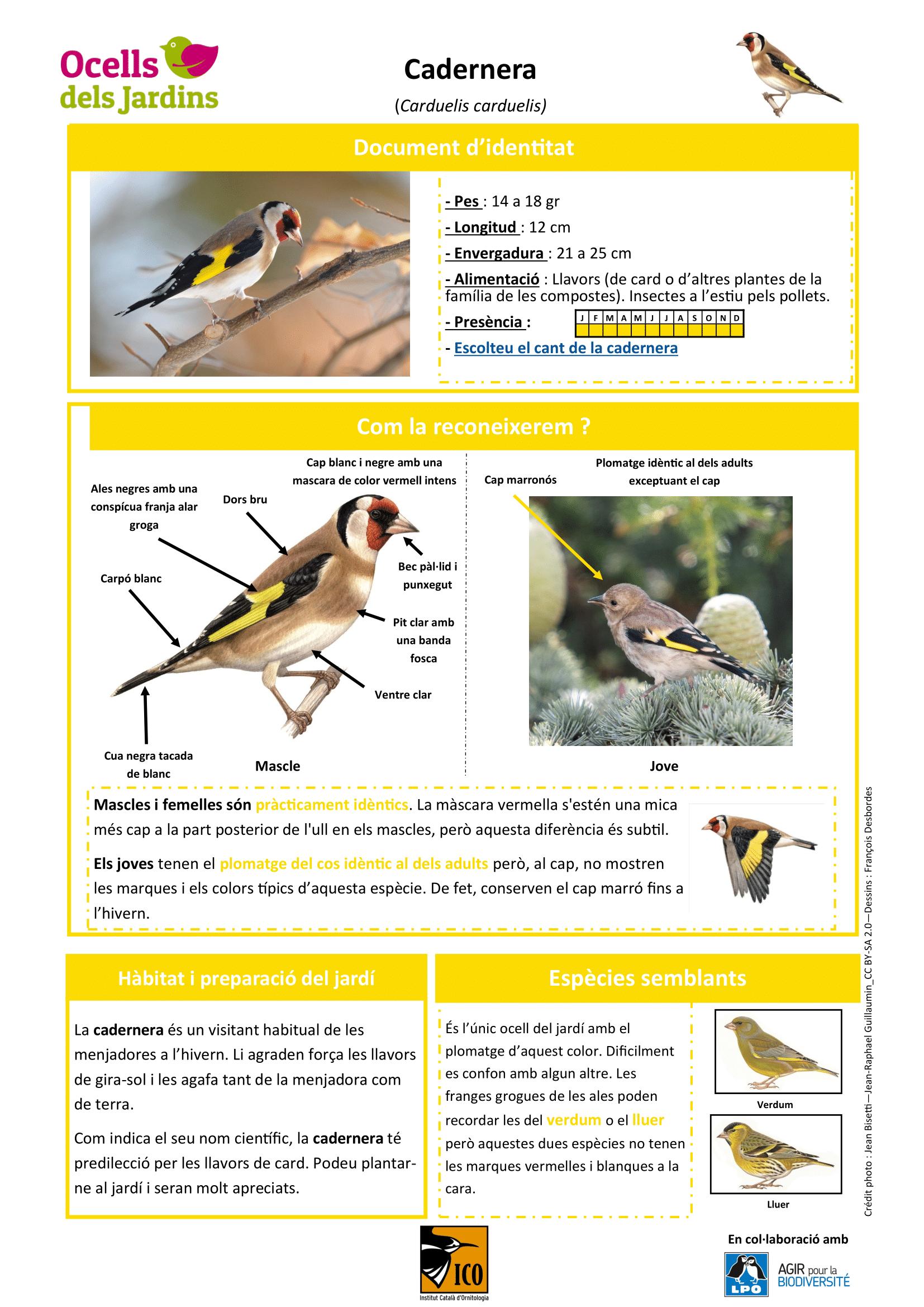 https://cdnfiles1.biolovision.net/www.ocellsdelsjardins.cat/userfiles/cadernera-1.png