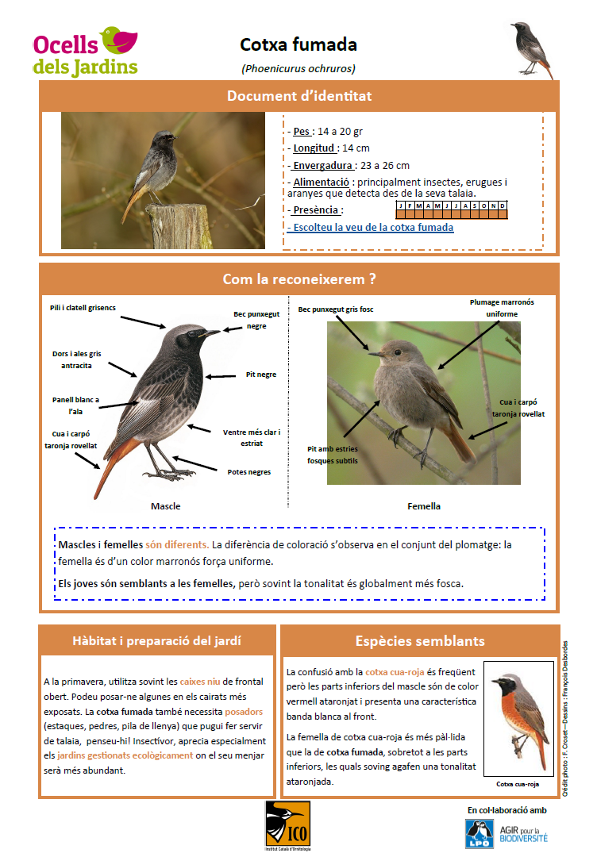 https://cdnfiles1.biolovision.net/www.ocellsdelsjardins.cat/userfiles/cotxafumada.png