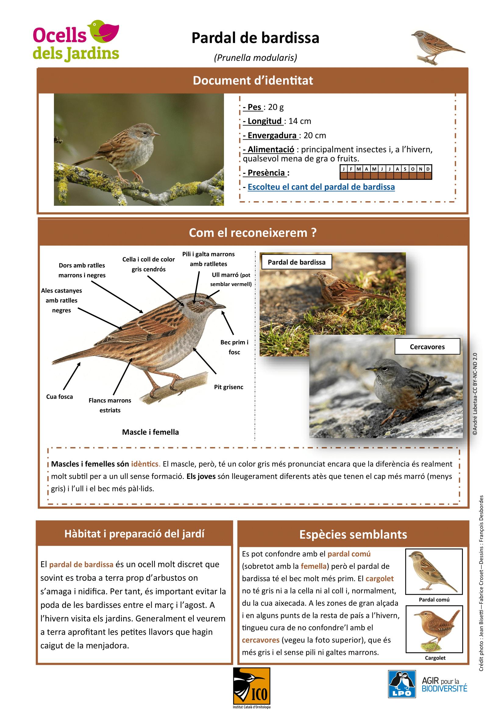 https://cdnfiles1.biolovision.net/www.ocellsdelsjardins.cat/userfiles/pardaldebardissa-1.png