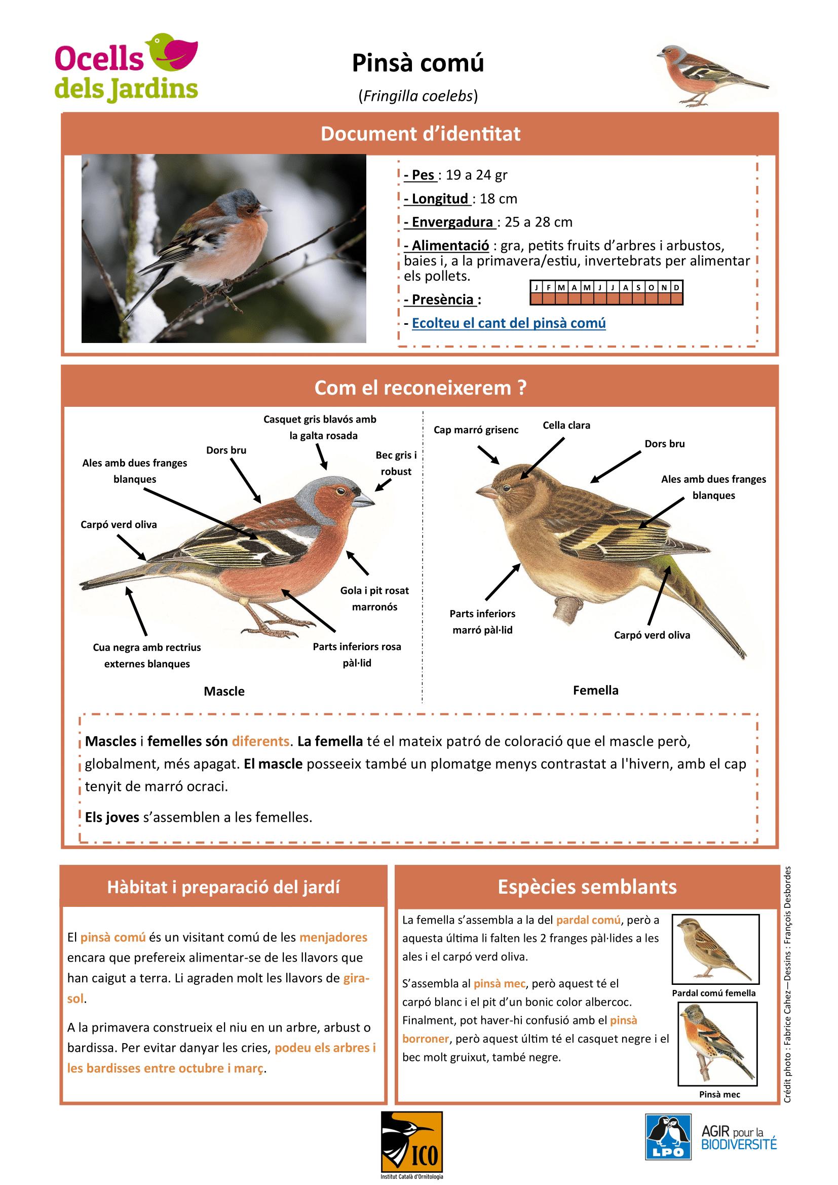 https://cdnfiles1.biolovision.net/www.ocellsdelsjardins.cat/userfiles/pinsacomu-1.png