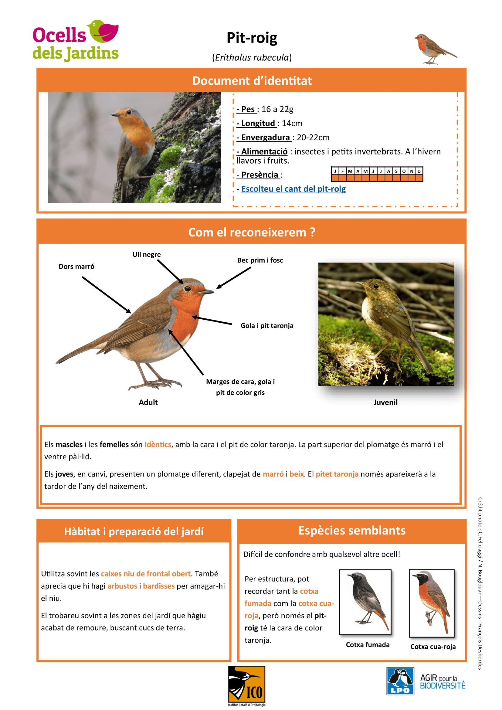 https://cdnfiles1.biolovision.net/www.ocellsdelsjardins.cat/userfiles/pitroig-1.png