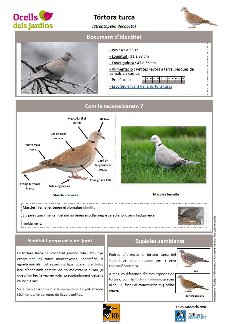 https://cdnfiles1.biolovision.net/www.ocellsdelsjardins.cat/userfiles/strtur.png