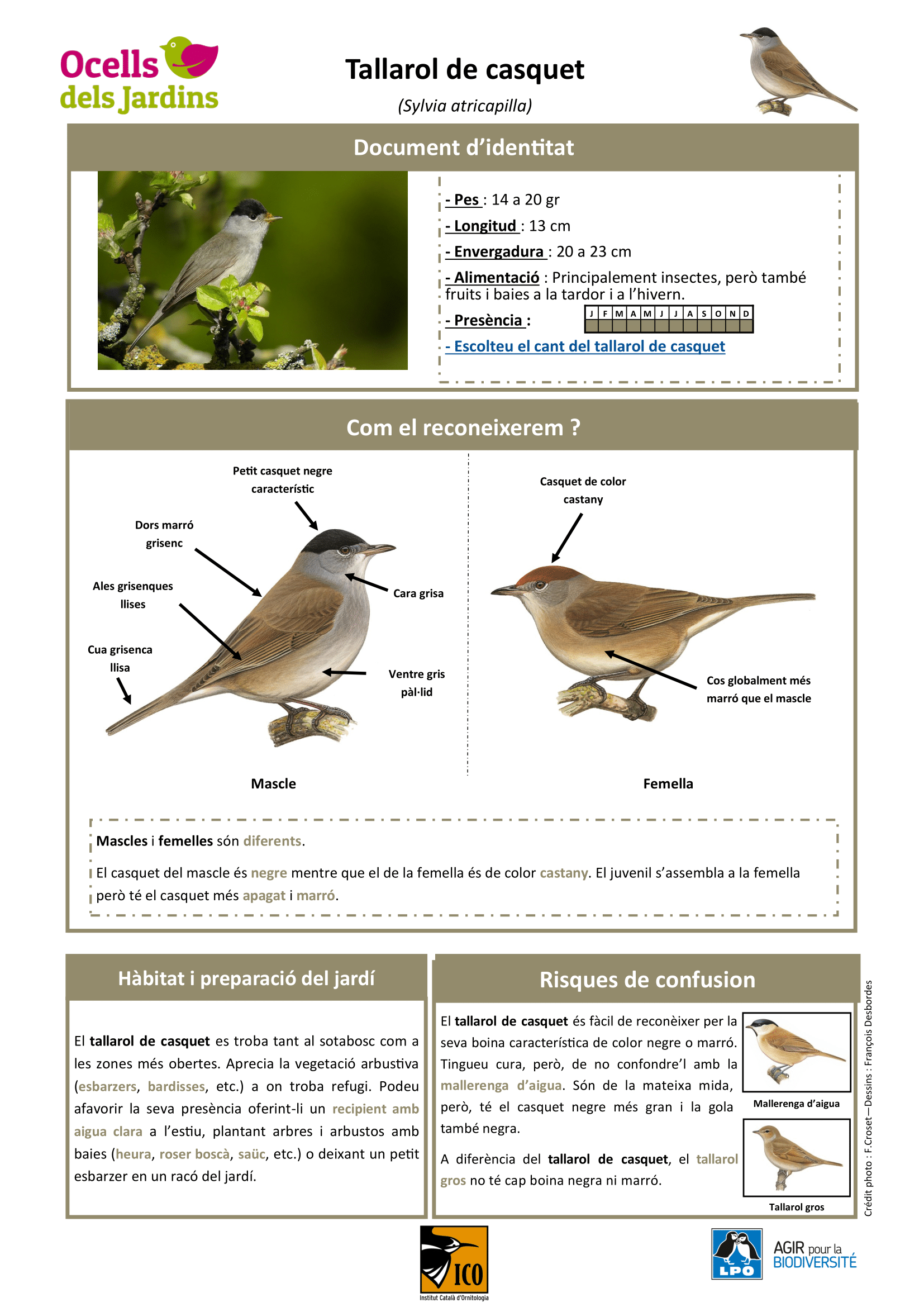 https://cdnfiles1.biolovision.net/www.ocellsdelsjardins.cat/userfiles/tallaroldecasquet-1.png