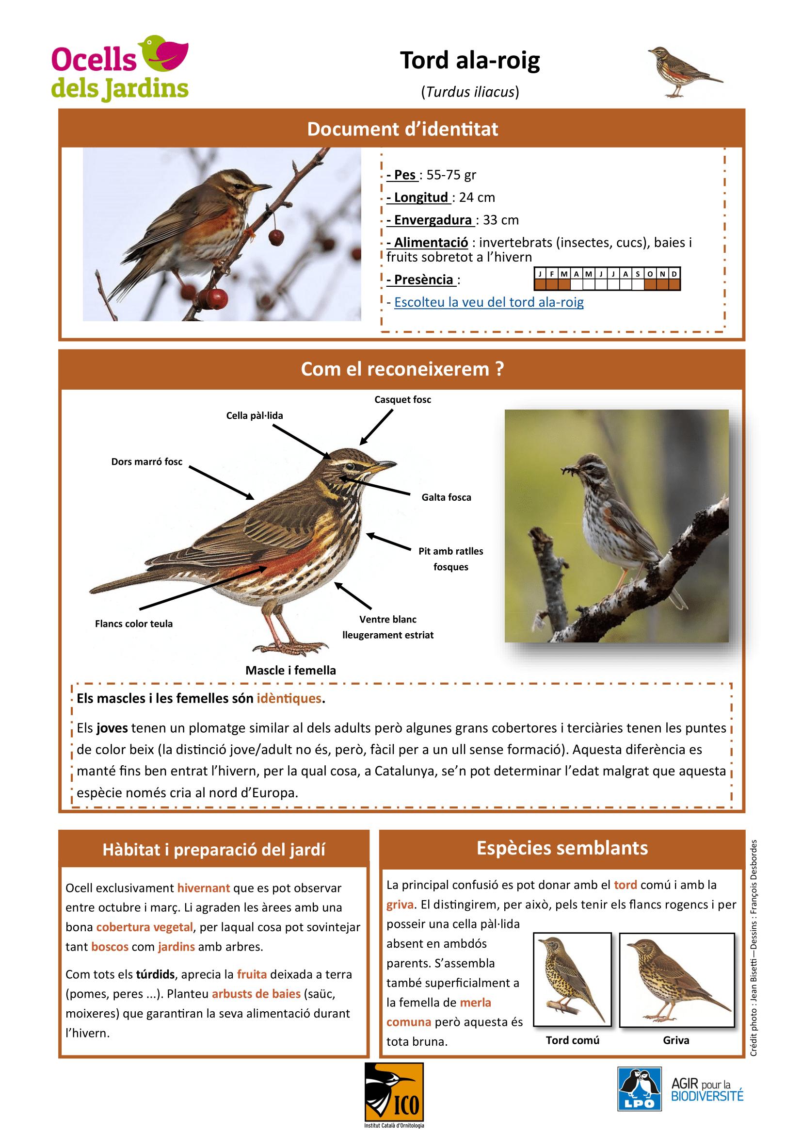 https://cdnfiles1.biolovision.net/www.ocellsdelsjardins.cat/userfiles/tordala-roig1-1.png