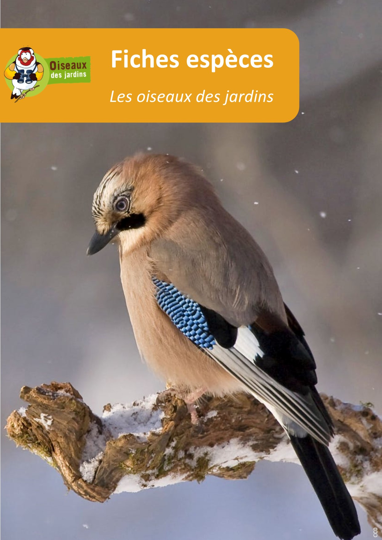 https://cdnfiles1.biolovision.net/www.oiseauxdesjardins.fr/userfiles/Fichesespces/Composition2.jpg