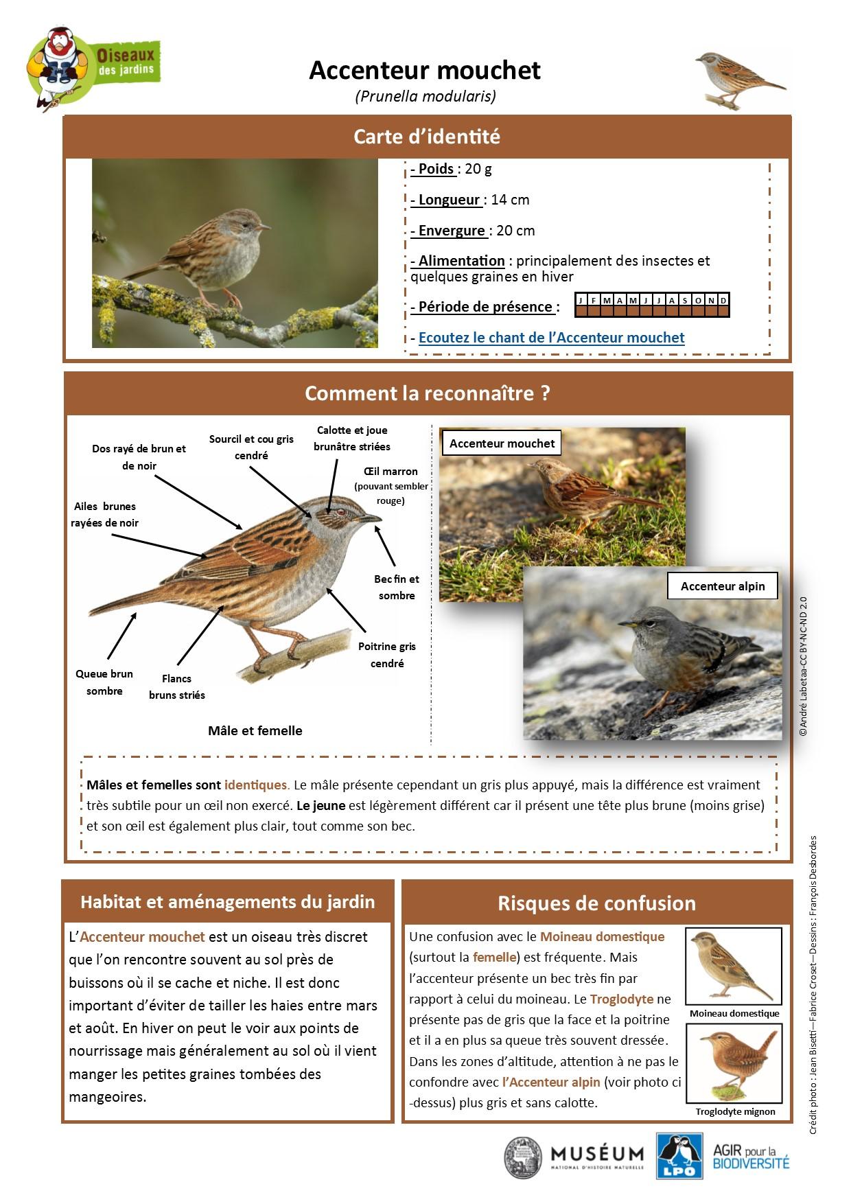 https://cdnfiles1.biolovision.net/www.oiseauxdesjardins.fr/userfiles/Fichesespces/FicheespceACM.pdf