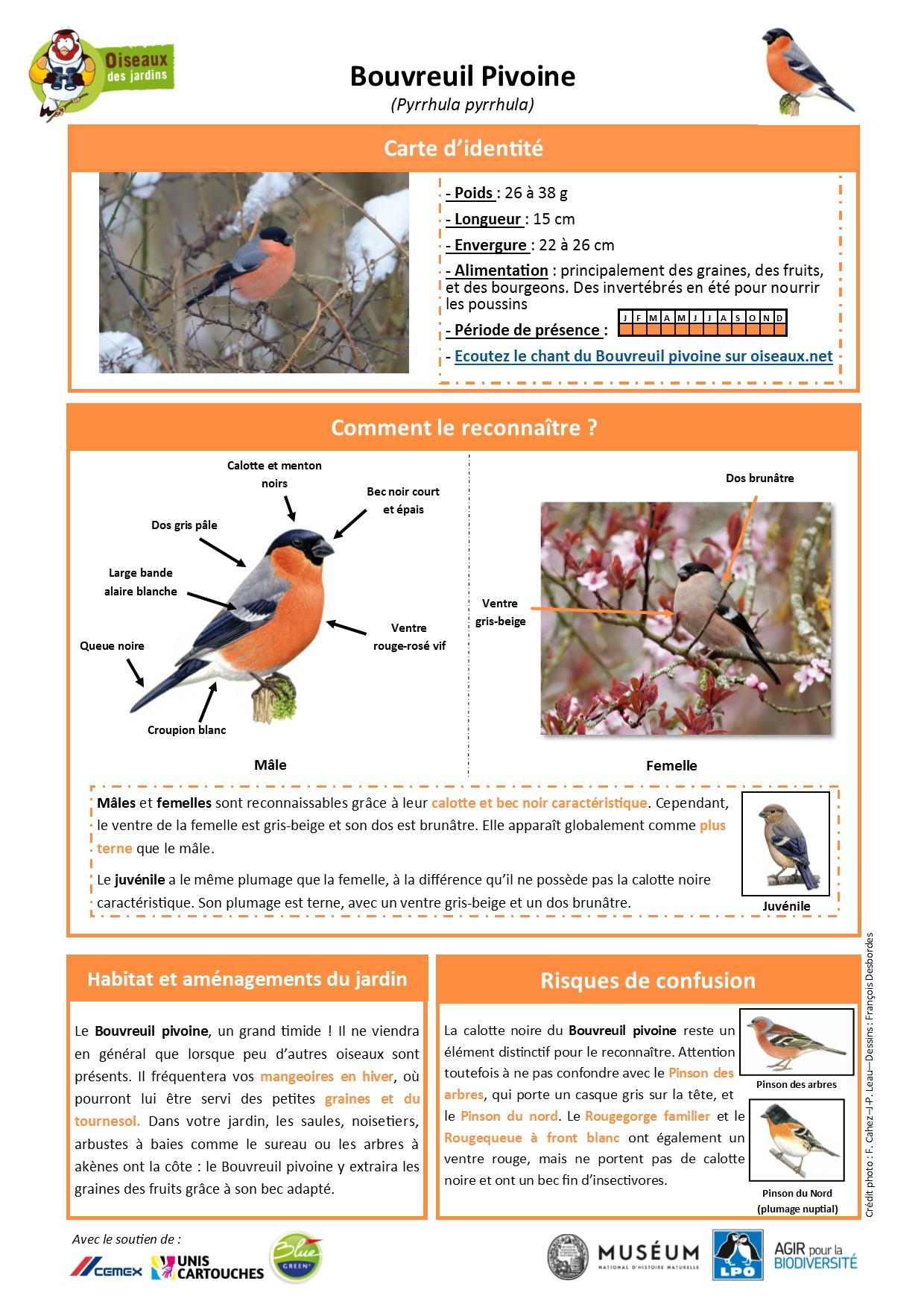 https://cdnfiles1.biolovision.net/www.oiseauxdesjardins.fr/userfiles/Fichesespces/FicheespceBP.pdf