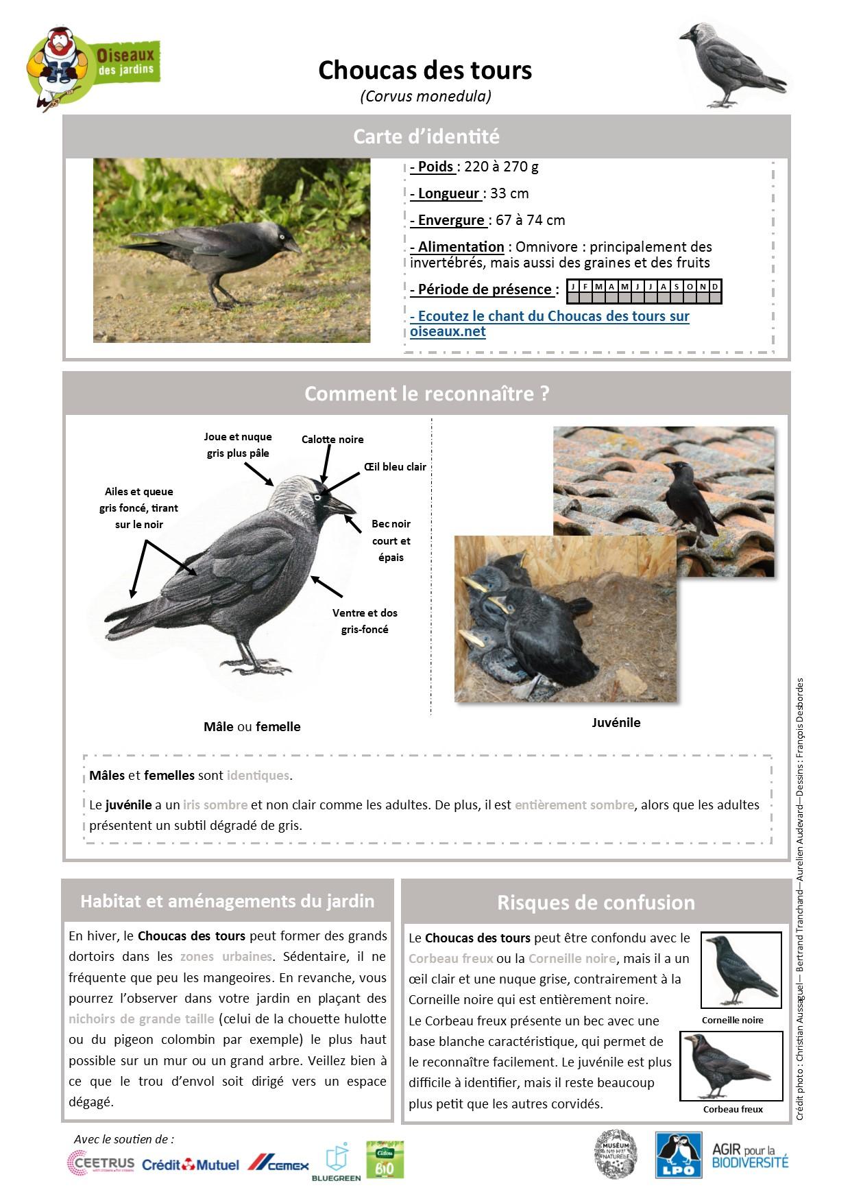 https://cdnfiles1.biolovision.net/www.oiseauxdesjardins.fr/userfiles/Fichesespces/FicheespceCDT.pdf