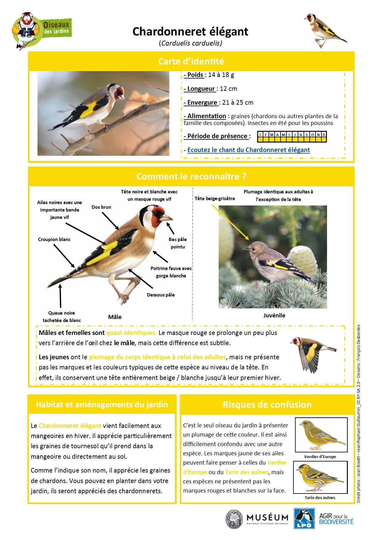 https://cdnfiles1.biolovision.net/www.oiseauxdesjardins.fr/userfiles/Fichesespces/FicheespceCEG.pdf