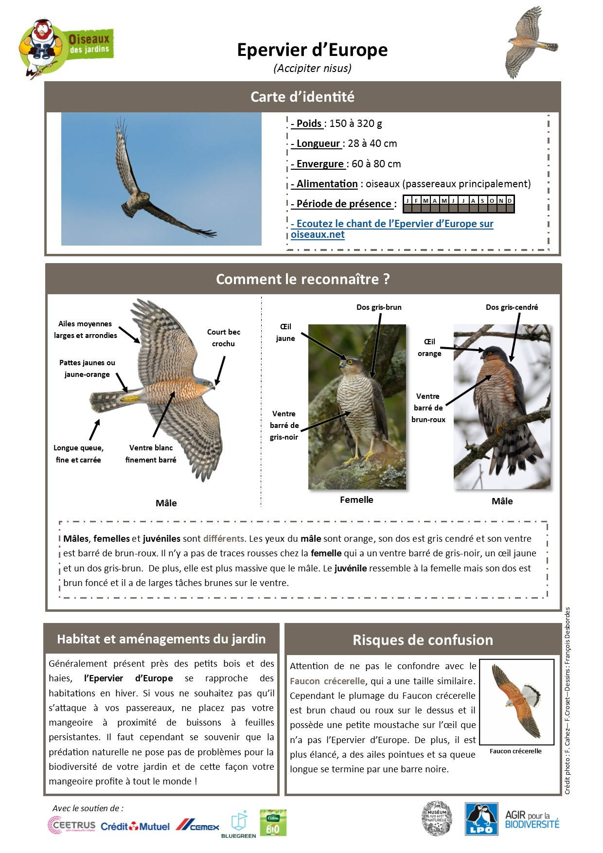 https://cdnfiles1.biolovision.net/www.oiseauxdesjardins.fr/userfiles/Fichesespces/FicheespceEE.pdf
