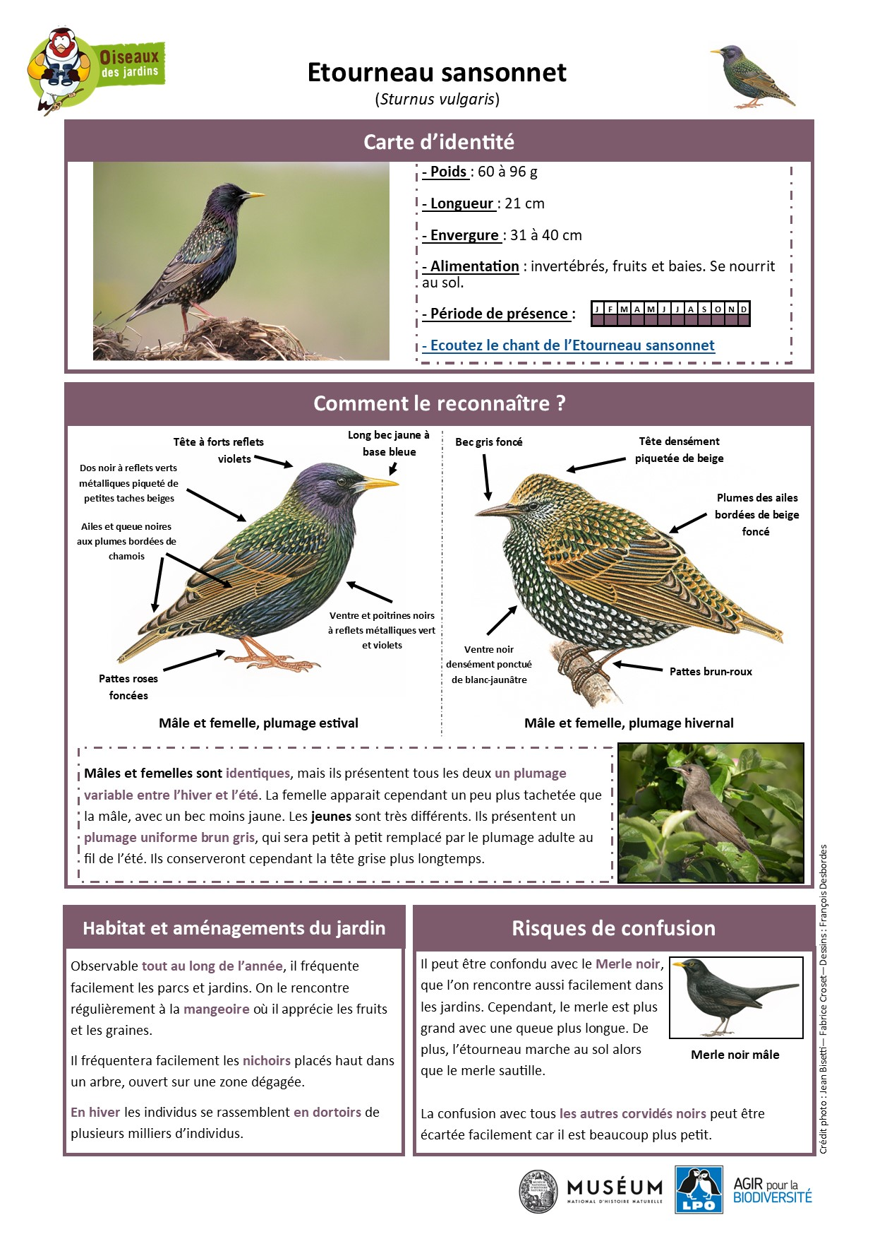 https://cdnfiles1.biolovision.net/www.oiseauxdesjardins.fr/userfiles/Fichesespces/FicheespceETScorrige.jpg