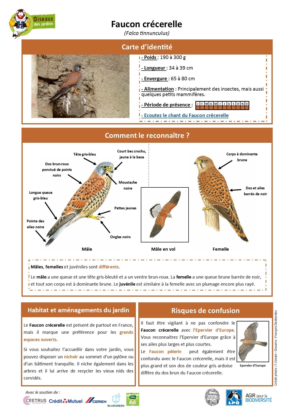 https://cdnfiles1.biolovision.net/www.oiseauxdesjardins.fr/userfiles/Fichesespces/FicheespceFCv2.pdf