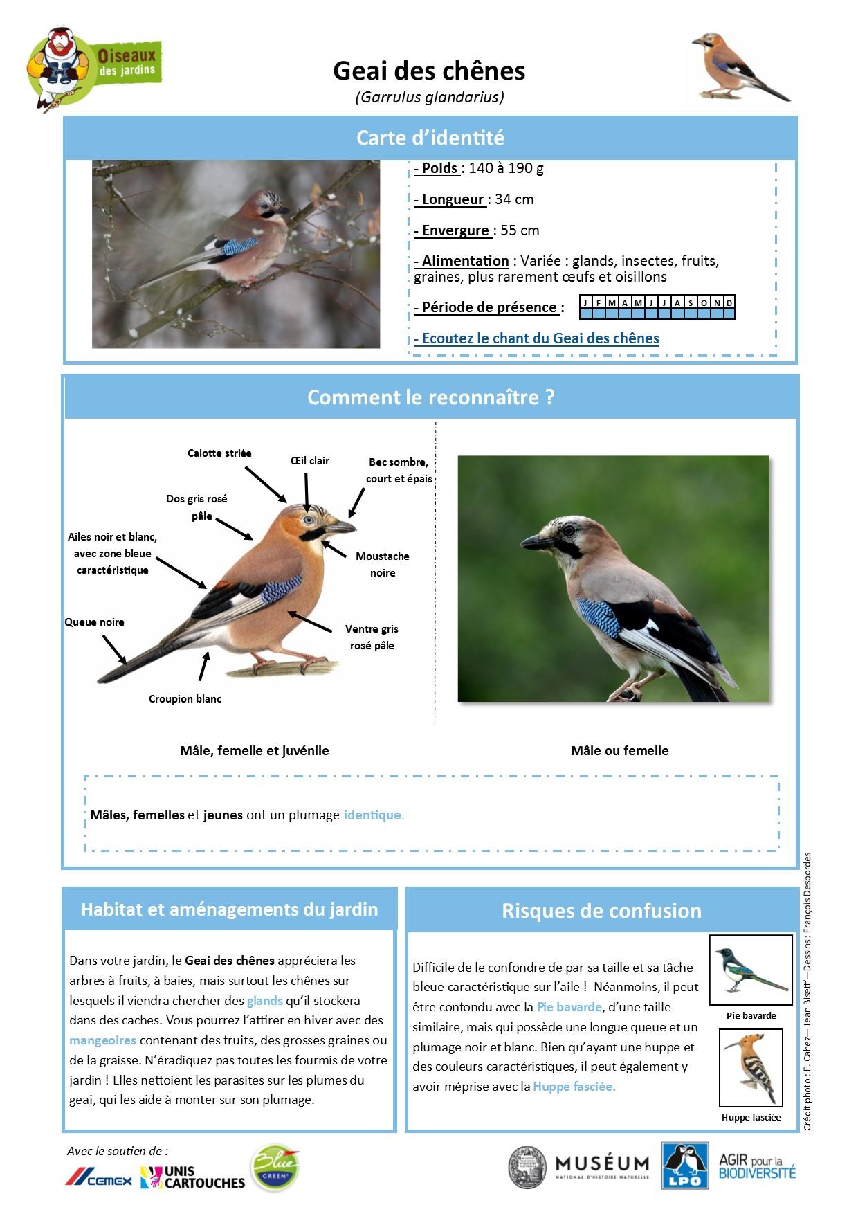https://cdnfiles1.biolovision.net/www.oiseauxdesjardins.fr/userfiles/Fichesespces/FicheespceGDC.pdf