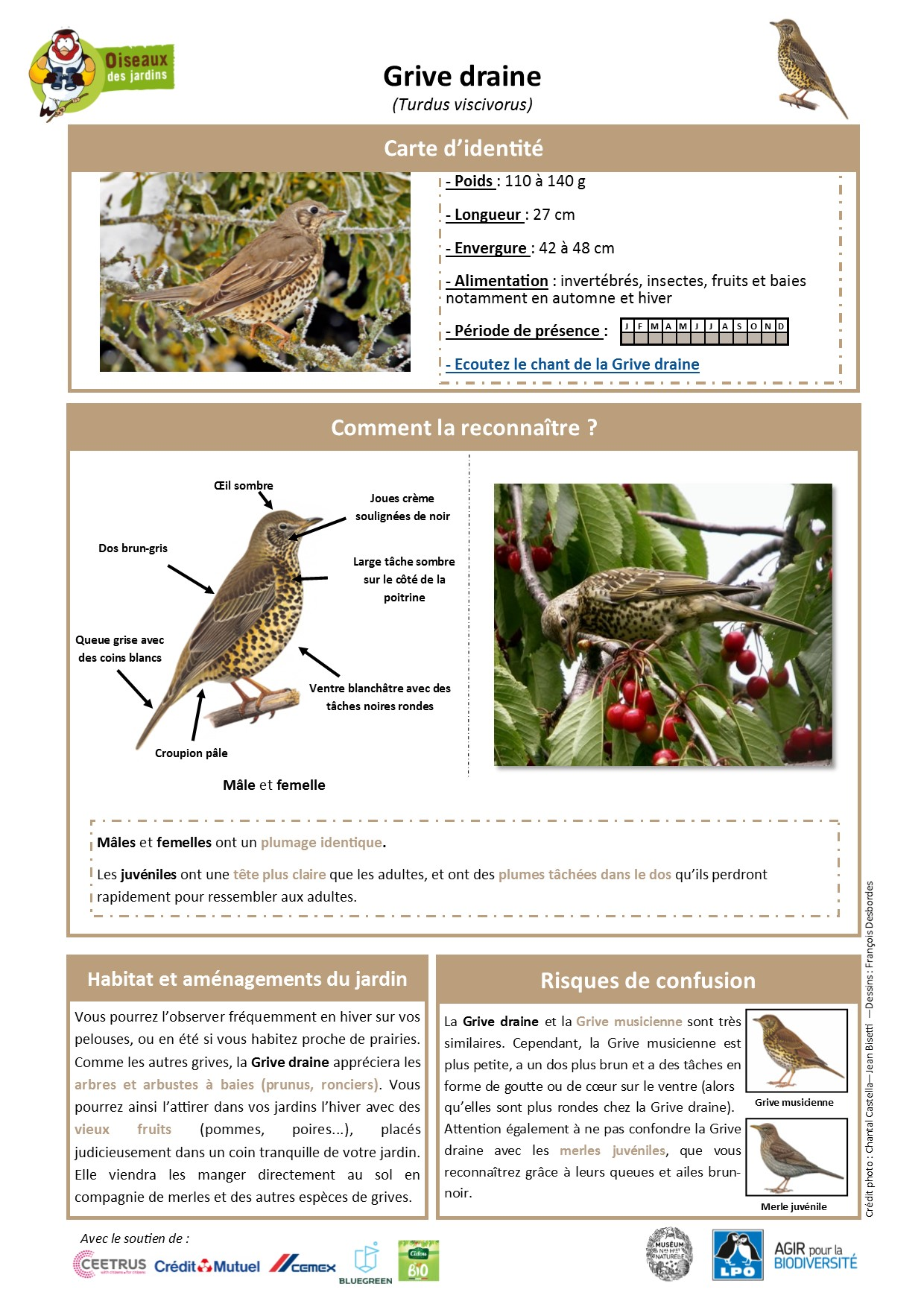 https://cdnfiles1.biolovision.net/www.oiseauxdesjardins.fr/userfiles/Fichesespces/FicheespceGDv2EC.pdf
