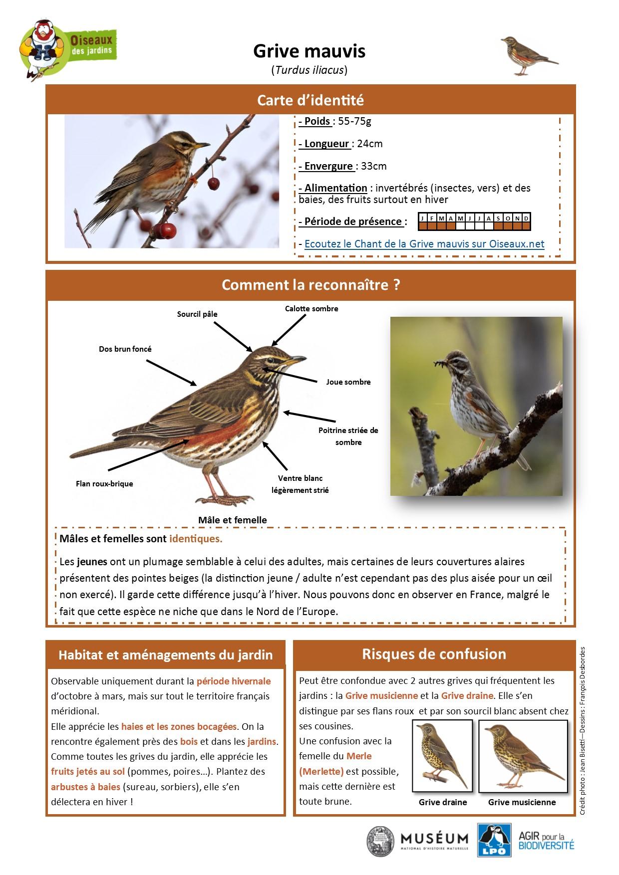 https://cdnfiles1.biolovision.net/www.oiseauxdesjardins.fr/userfiles/Fichesespces/FicheespceGMA.pdf