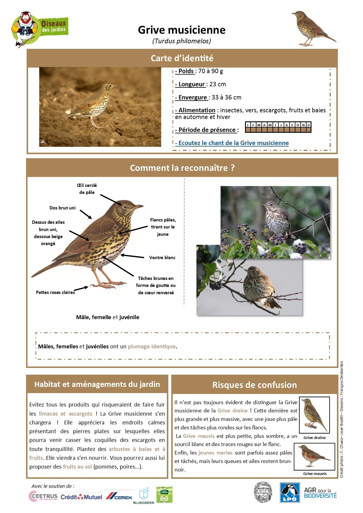 https://cdnfiles1.biolovision.net/www.oiseauxdesjardins.fr/userfiles/Fichesespces/FicheespceGMcpsv2.pdf