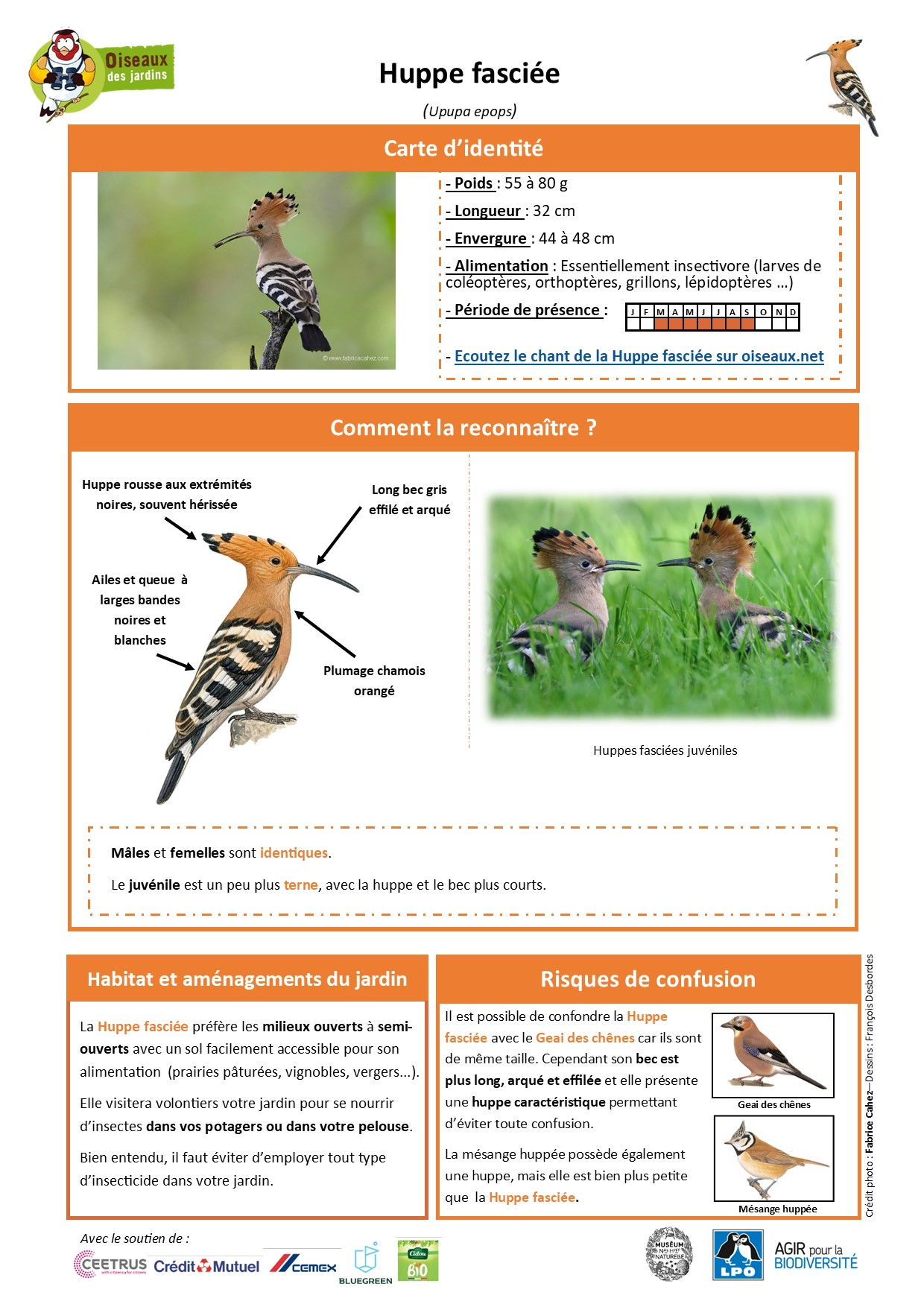 https://cdnfiles1.biolovision.net/www.oiseauxdesjardins.fr/userfiles/Fichesespces/FicheespceHFA-Compress.jpg