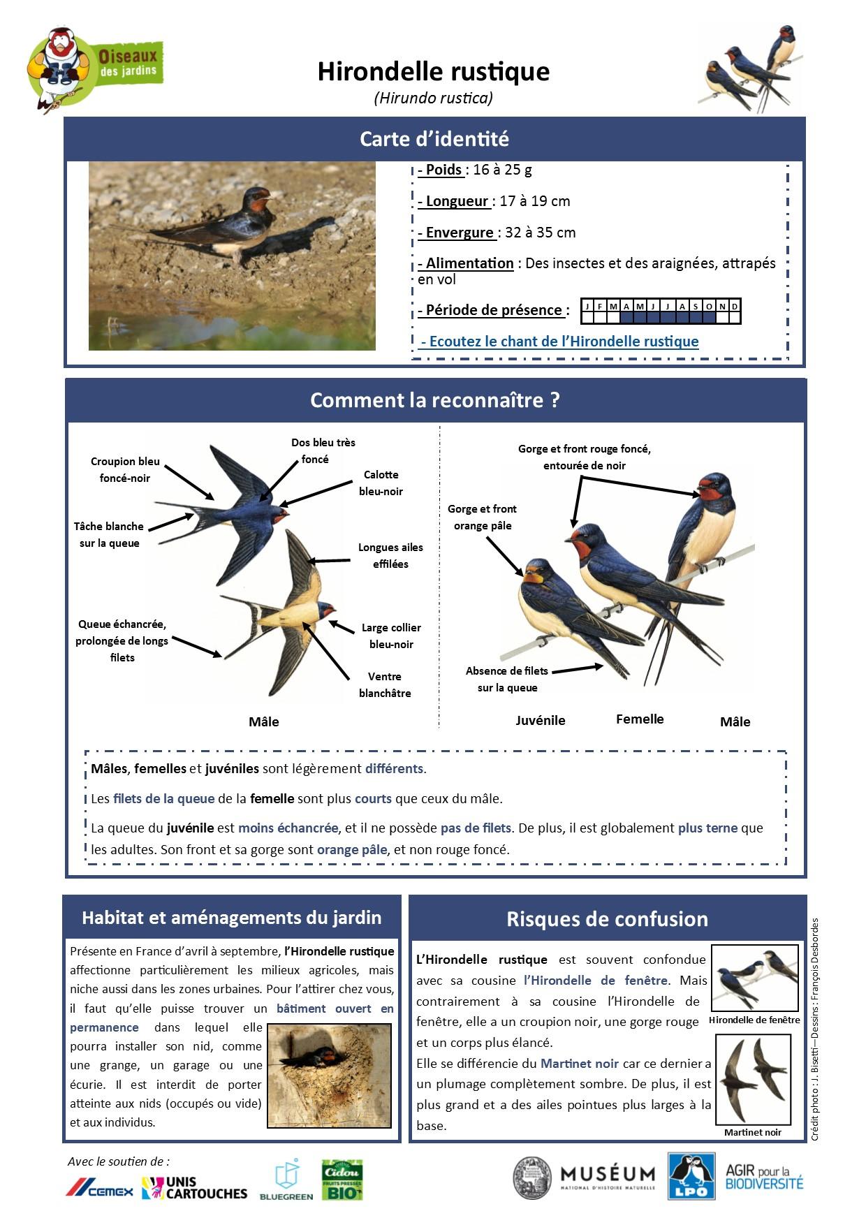 https://cdnfiles1.biolovision.net/www.oiseauxdesjardins.fr/userfiles/Fichesespces/FicheespceHR.pdf