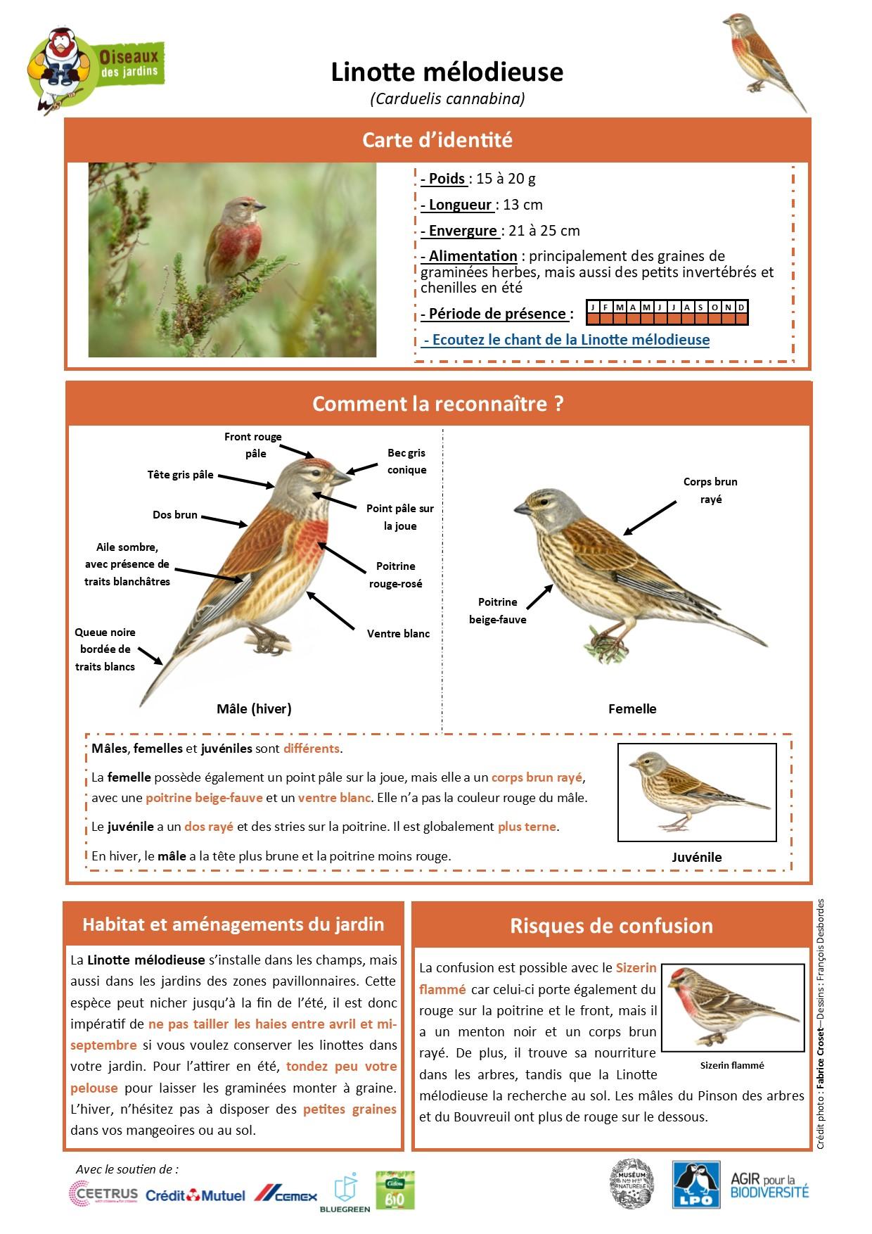 https://cdnfiles1.biolovision.net/www.oiseauxdesjardins.fr/userfiles/Fichesespces/FicheespceLM.jpg