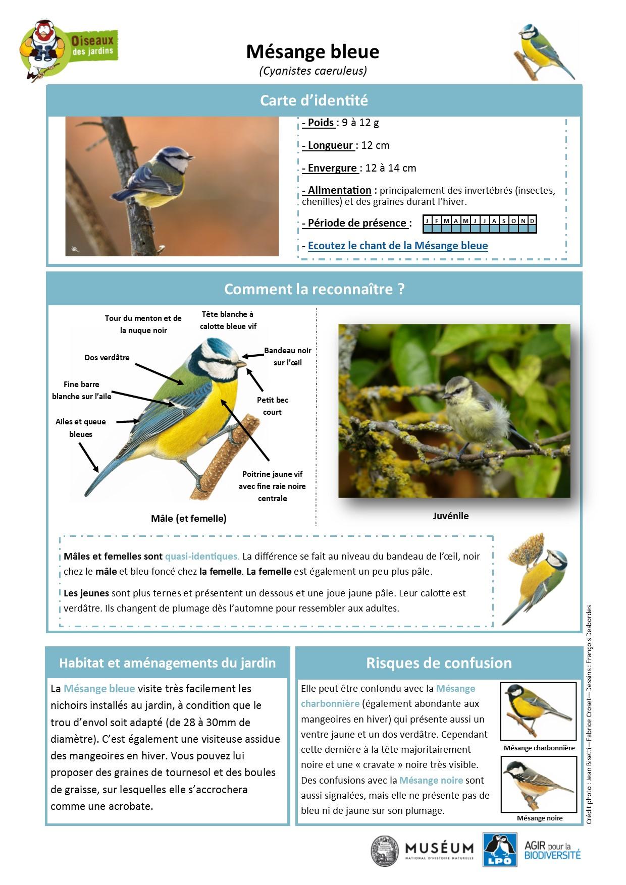 https://cdnfiles1.biolovision.net/www.oiseauxdesjardins.fr/userfiles/Fichesespces/FicheespceMB.pdf