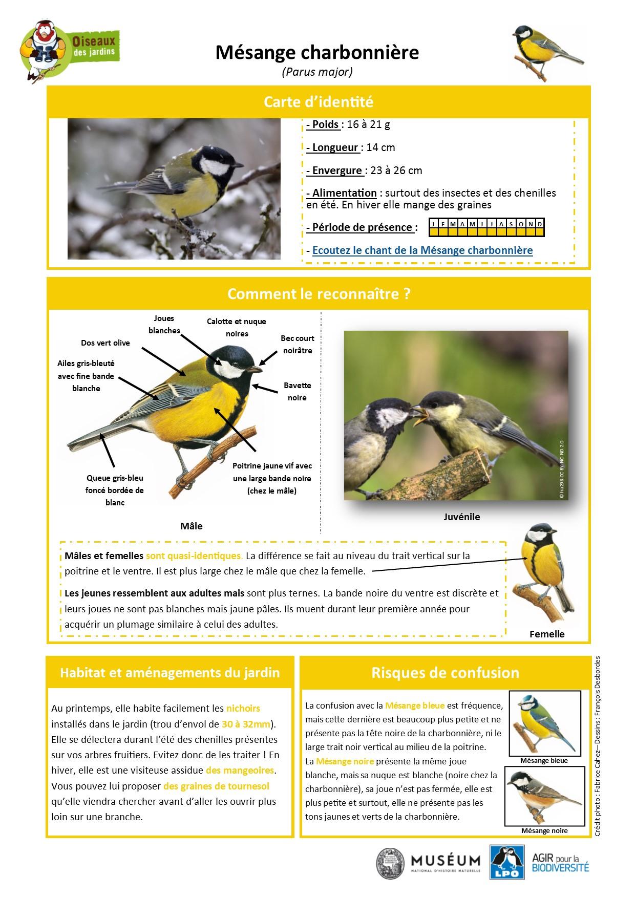 https://cdnfiles1.biolovision.net/www.oiseauxdesjardins.fr/userfiles/Fichesespces/FicheespceMC.pdf