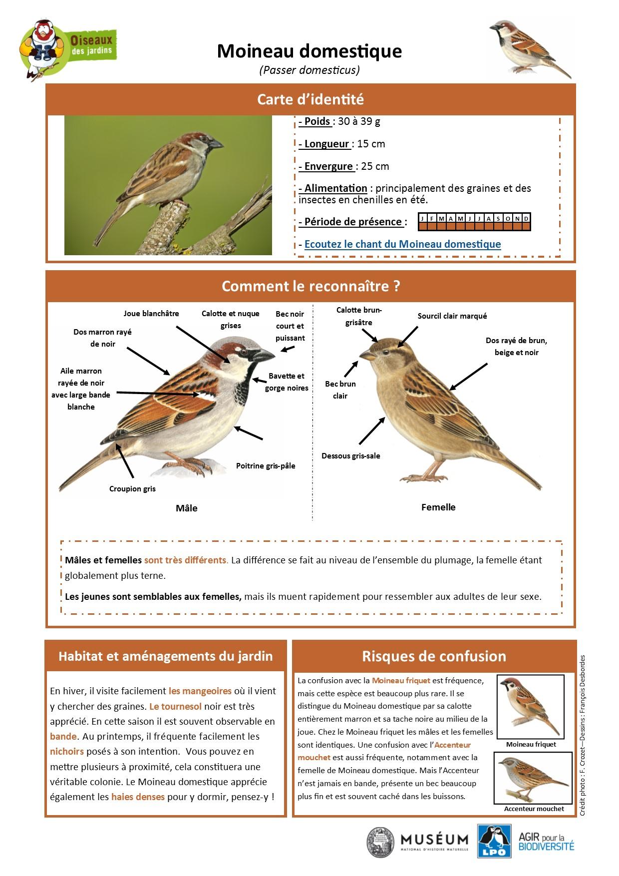 https://cdnfiles1.biolovision.net/www.oiseauxdesjardins.fr/userfiles/Fichesespces/FicheespceMD.pdf