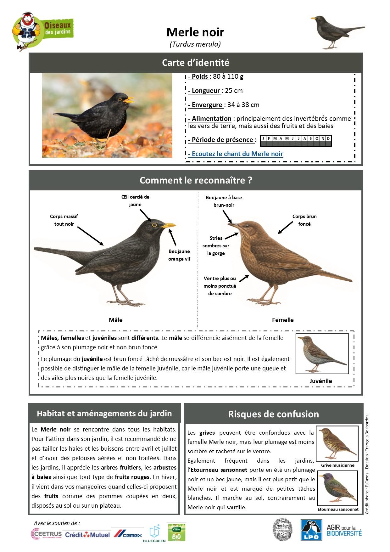 https://cdnfiles1.biolovision.net/www.oiseauxdesjardins.fr/userfiles/Fichesespces/FicheespceMERLEN.jpg