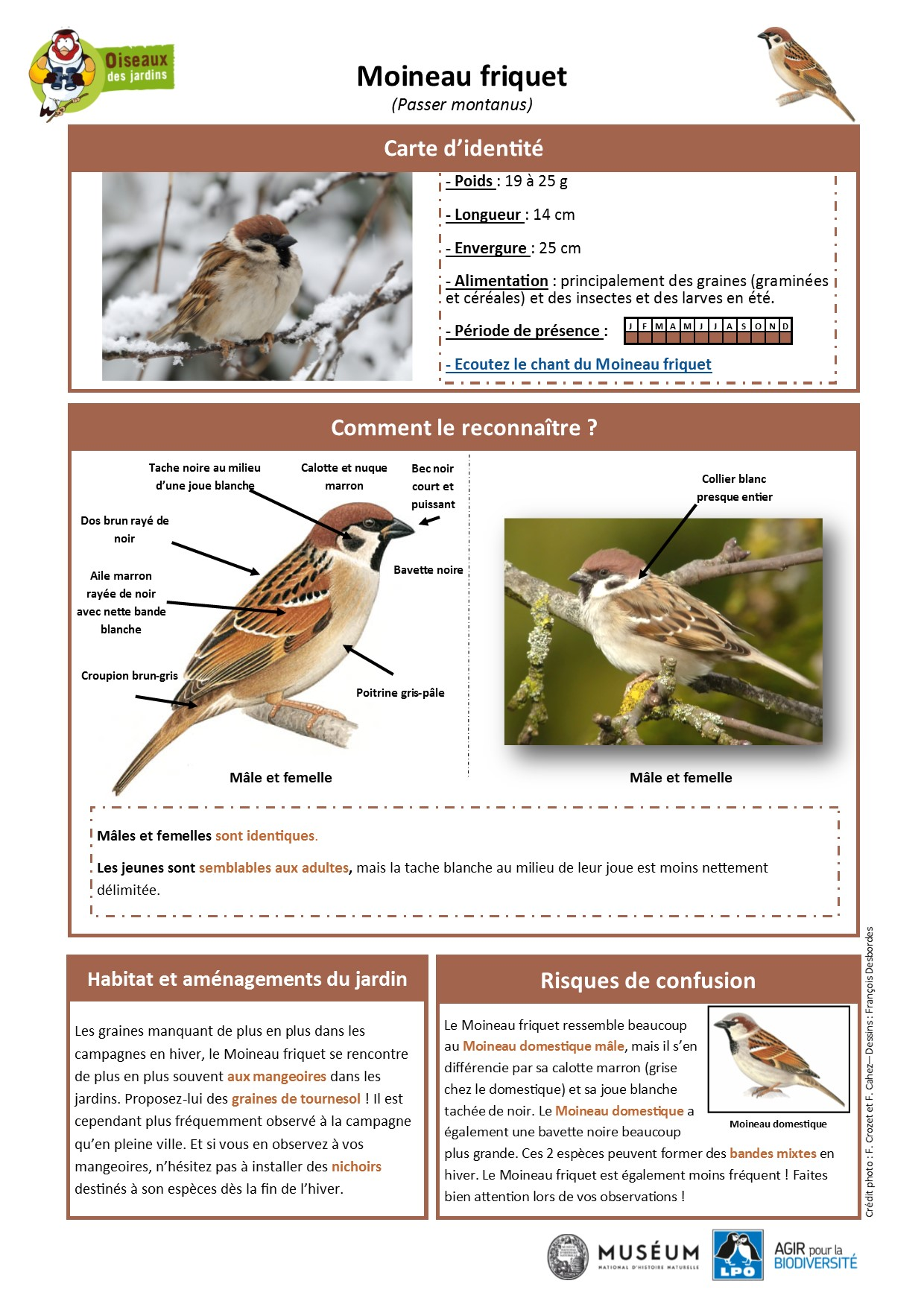 https://cdnfiles1.biolovision.net/www.oiseauxdesjardins.fr/userfiles/Fichesespces/FicheespceMF.pdf
