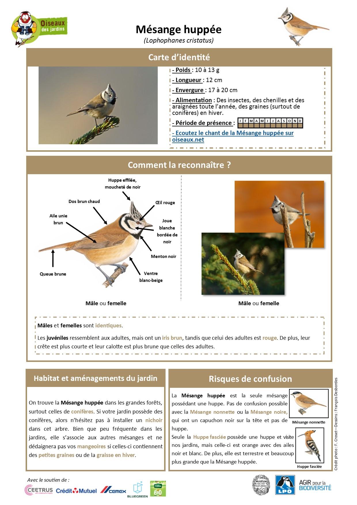 https://cdnfiles1.biolovision.net/www.oiseauxdesjardins.fr/userfiles/Fichesespces/FicheespceMHv2.pdf