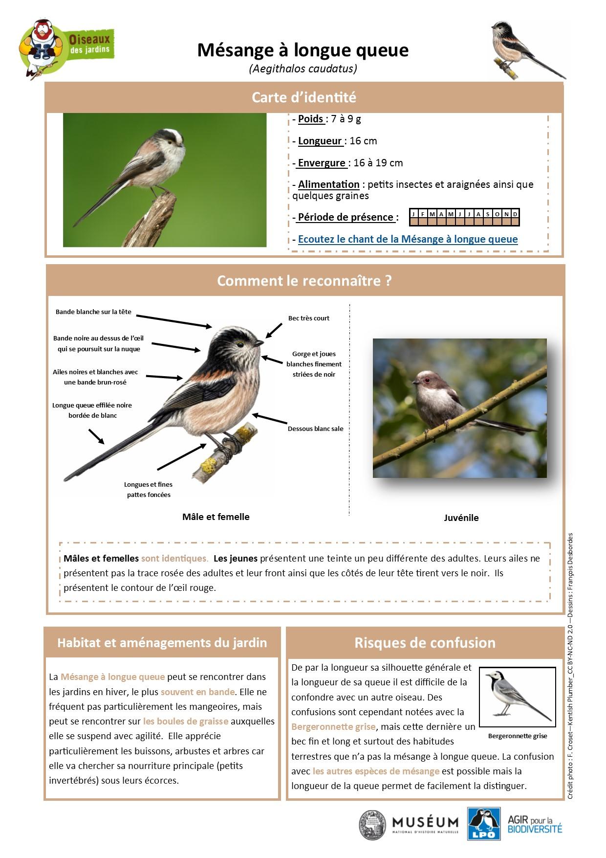 https://cdnfiles1.biolovision.net/www.oiseauxdesjardins.fr/userfiles/Fichesespces/FicheespceMLQ.pdf