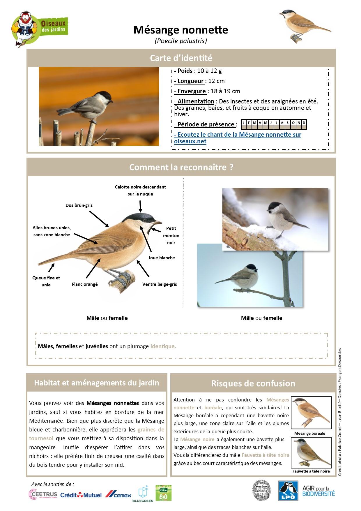 https://cdnfiles1.biolovision.net/www.oiseauxdesjardins.fr/userfiles/Fichesespces/FicheespceMNON.pdf