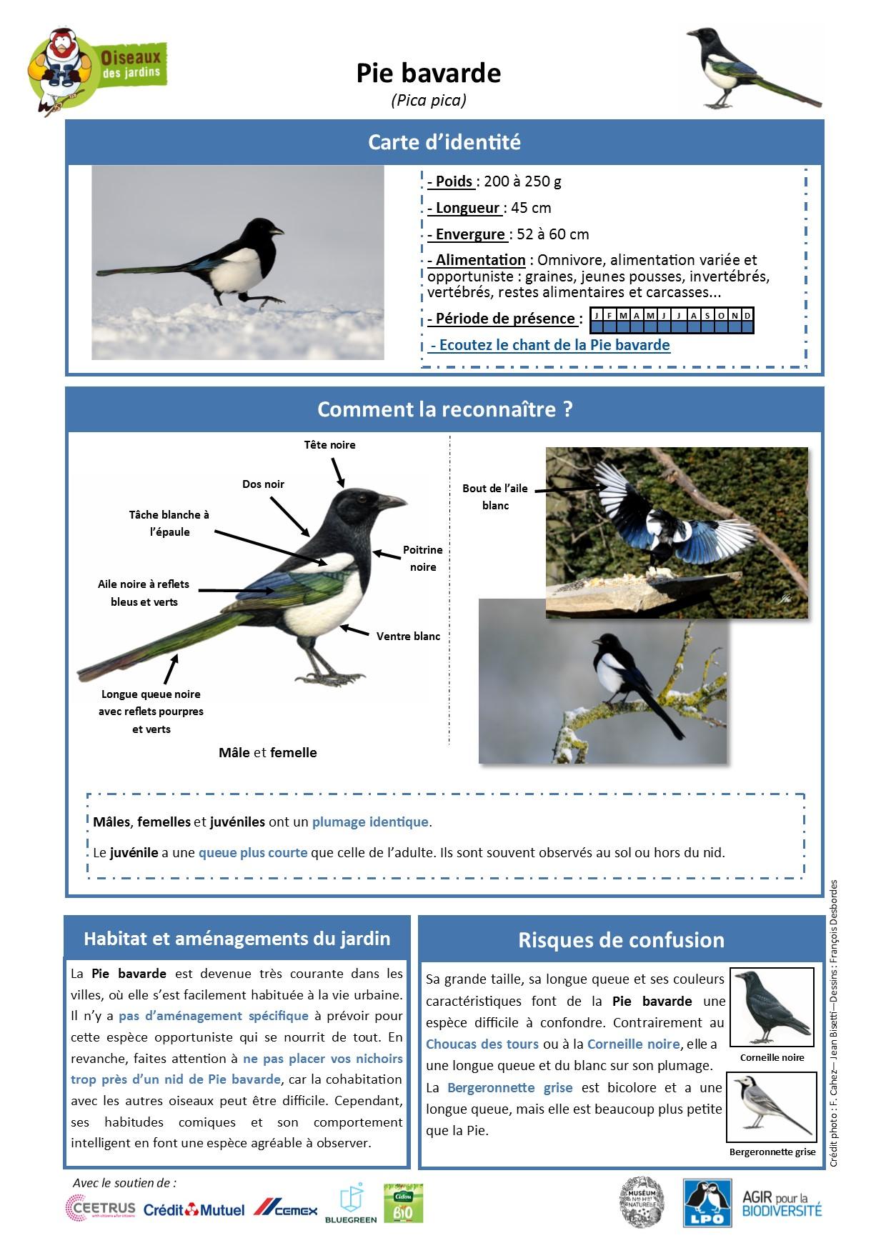 https://cdnfiles1.biolovision.net/www.oiseauxdesjardins.fr/userfiles/Fichesespces/FicheespcePB.jpg