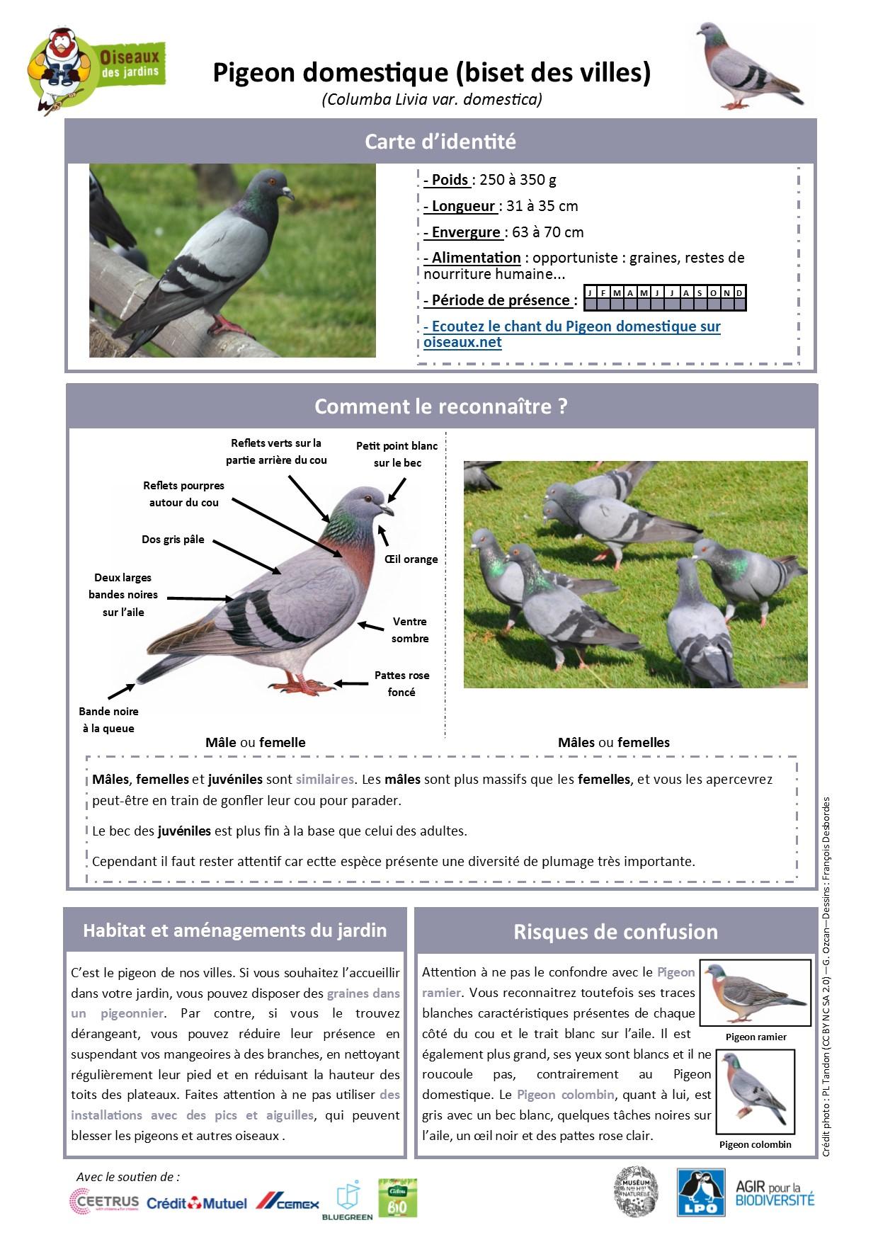 https://cdnfiles1.biolovision.net/www.oiseauxdesjardins.fr/userfiles/Fichesespces/FicheespcePD.pdf