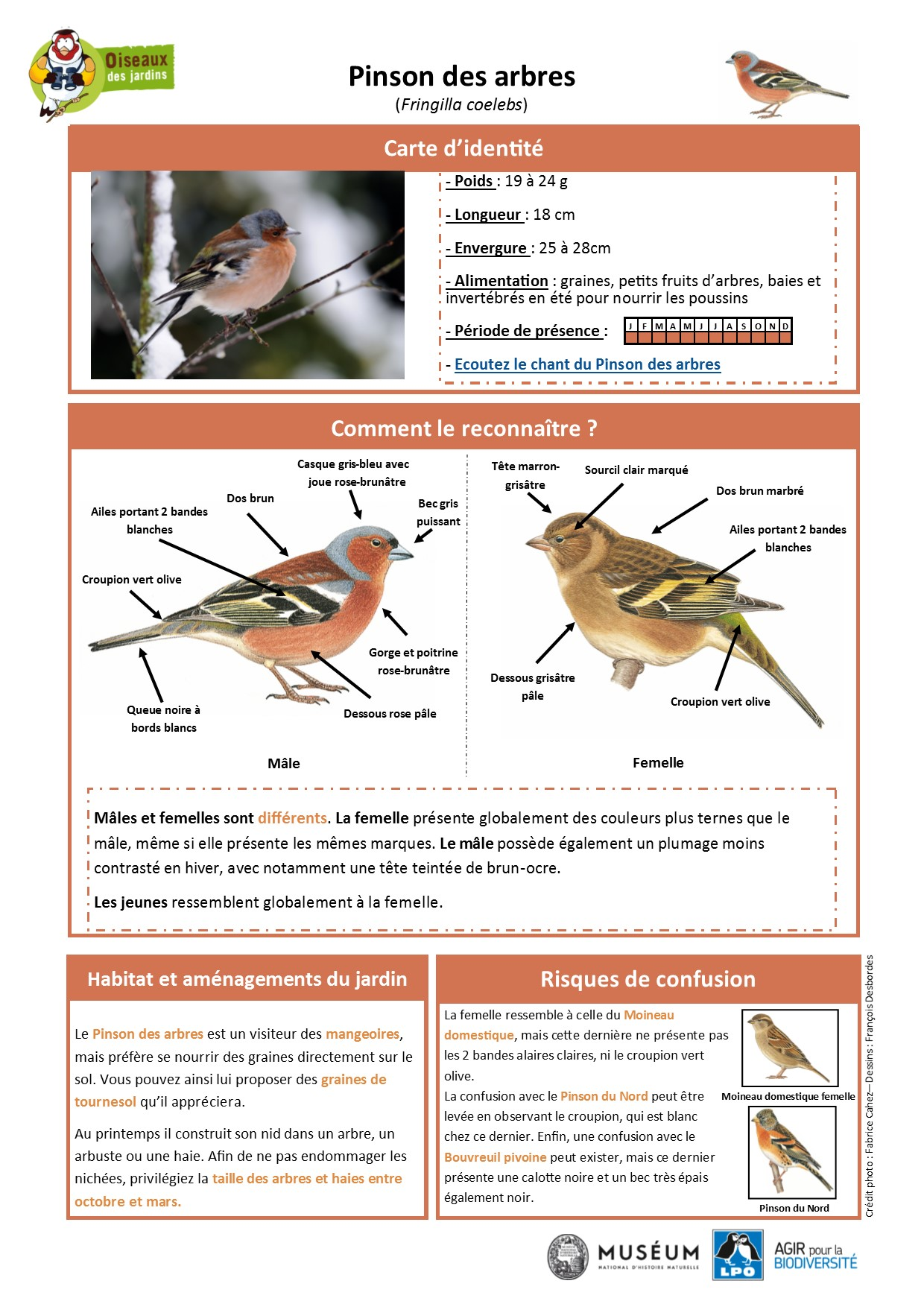 https://cdnfiles1.biolovision.net/www.oiseauxdesjardins.fr/userfiles/Fichesespces/FicheespcePDA.pdf