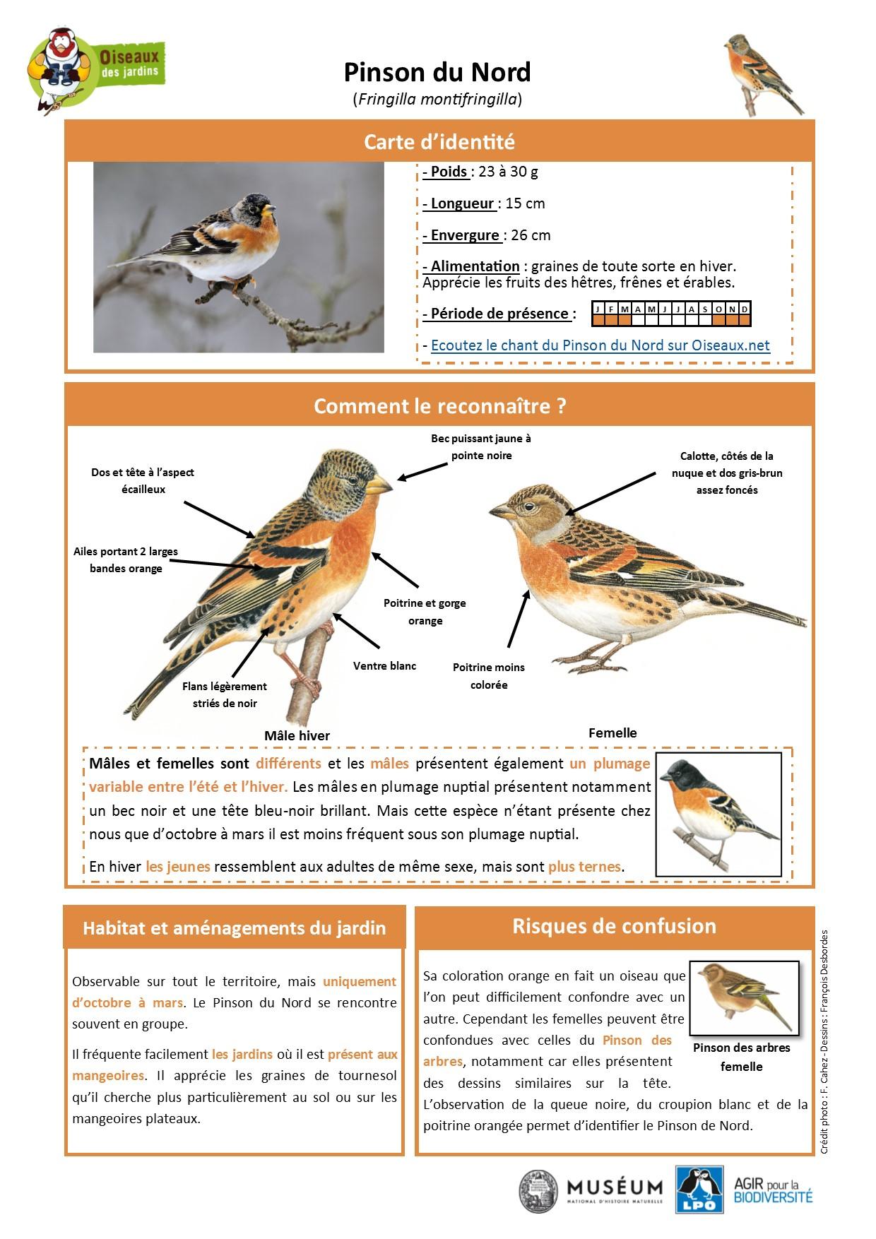 https://cdnfiles1.biolovision.net/www.oiseauxdesjardins.fr/userfiles/Fichesespces/FicheespcePDN.pdf