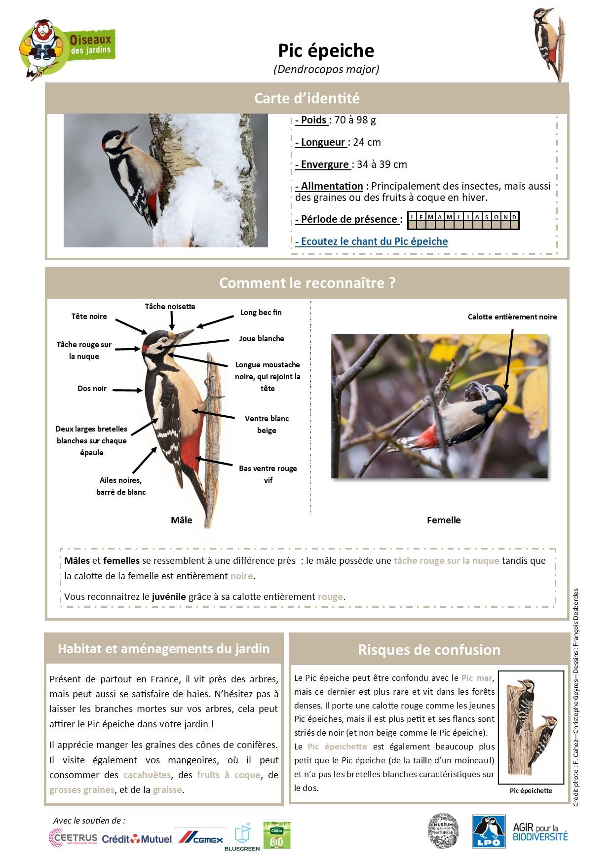 https://cdnfiles1.biolovision.net/www.oiseauxdesjardins.fr/userfiles/Fichesespces/FicheespcePE.jpg
