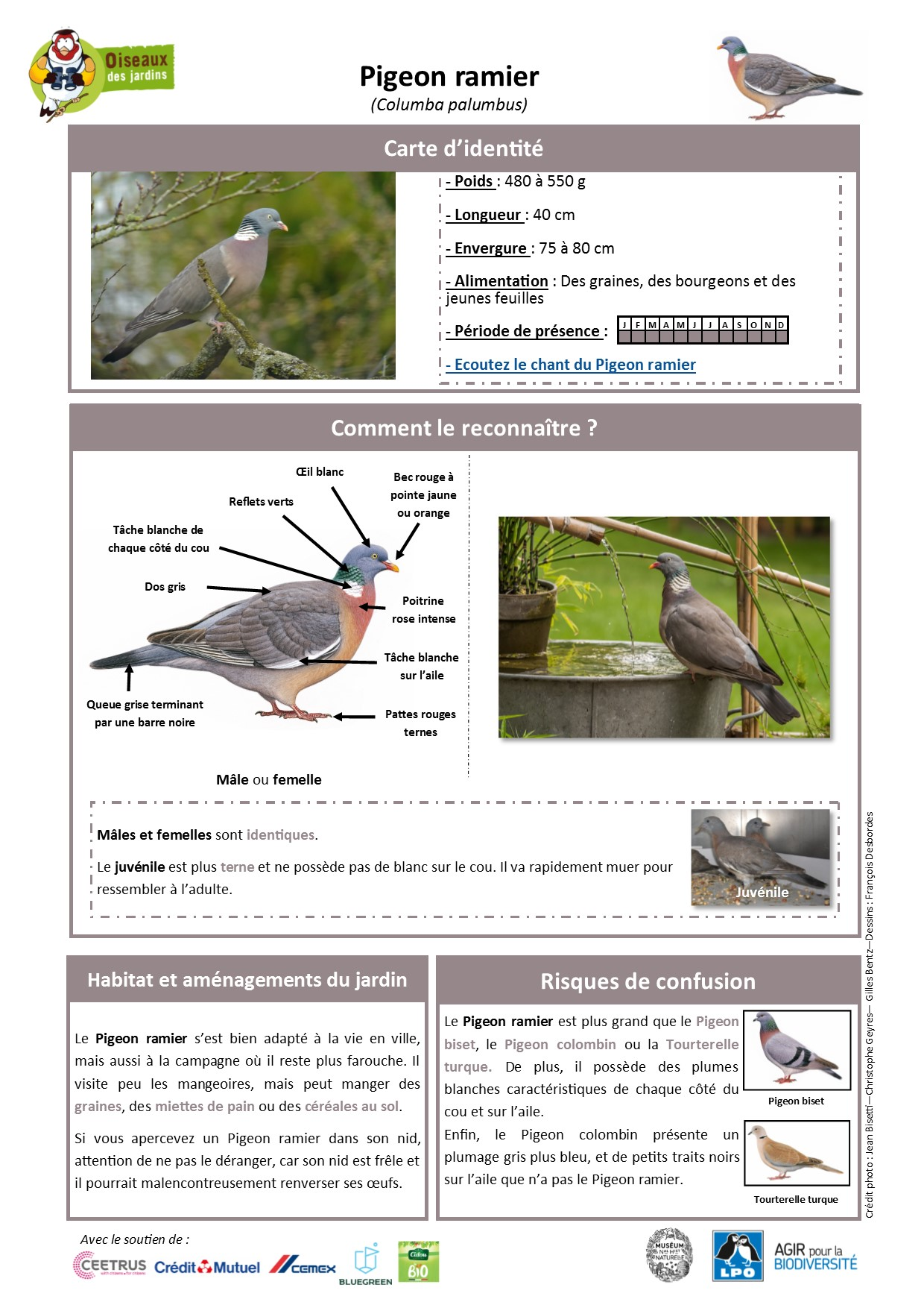 https://cdnfiles1.biolovision.net/www.oiseauxdesjardins.fr/userfiles/Fichesespces/FicheespcePR.pdf