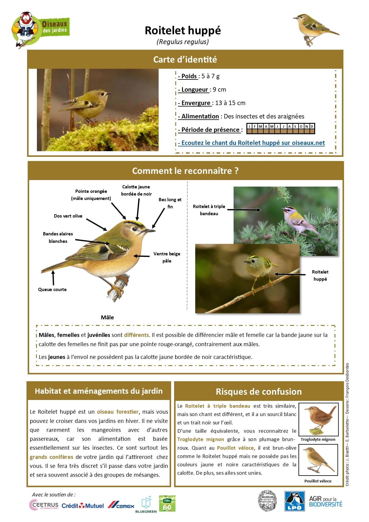 https://cdnfiles1.biolovision.net/www.oiseauxdesjardins.fr/userfiles/Fichesespces/FicheespceRHcompress.jpg