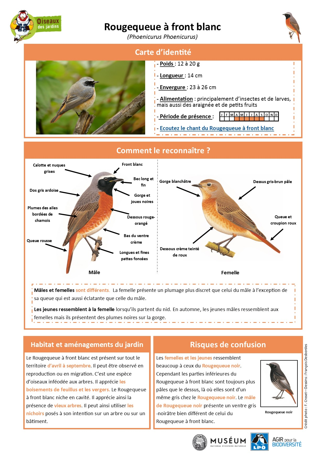 https://cdnfiles1.biolovision.net/www.oiseauxdesjardins.fr/userfiles/Fichesespces/FicheespceRQFB.pdf