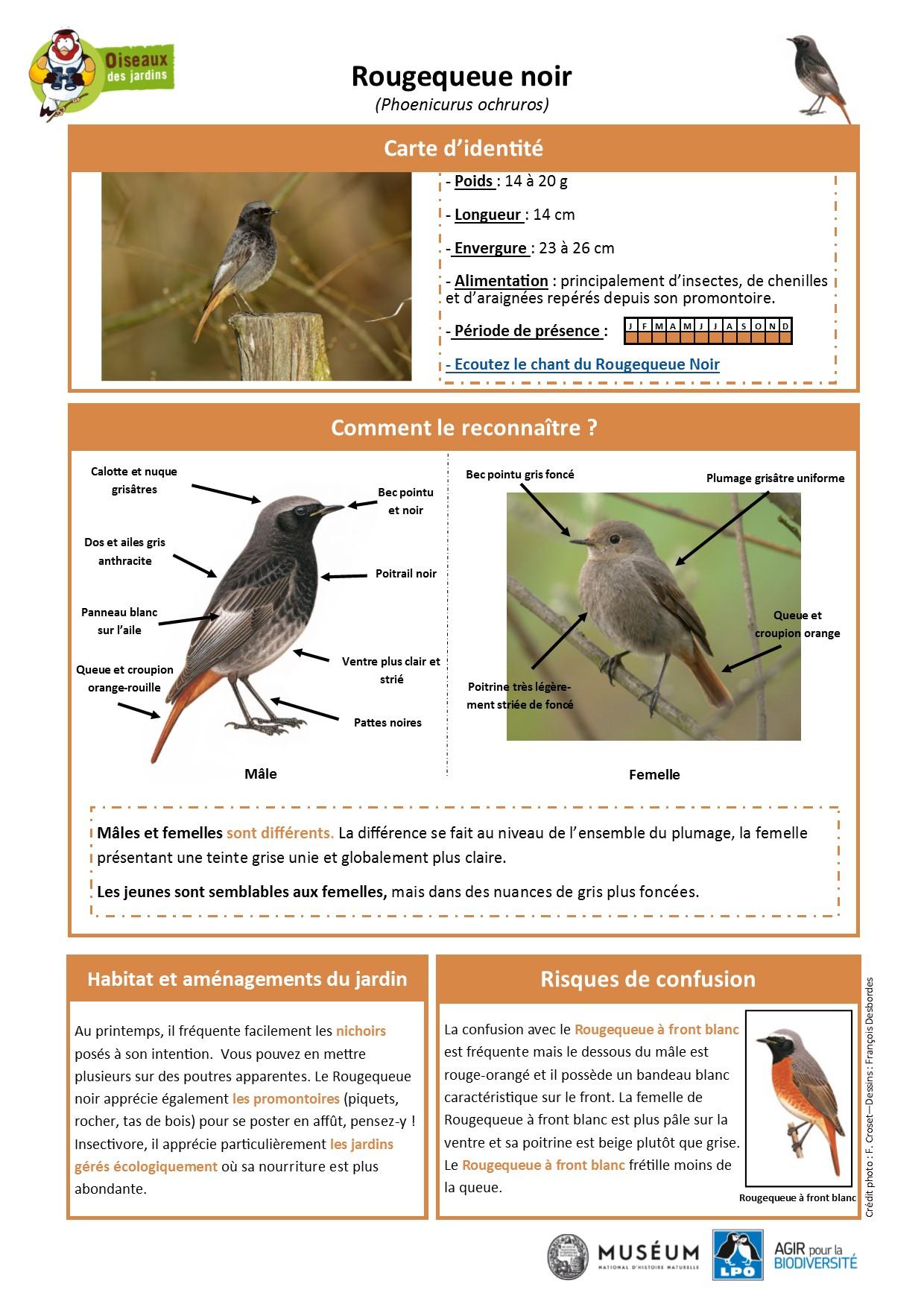 https://cdnfiles1.biolovision.net/www.oiseauxdesjardins.fr/userfiles/Fichesespces/FicheespceRQN.pdf