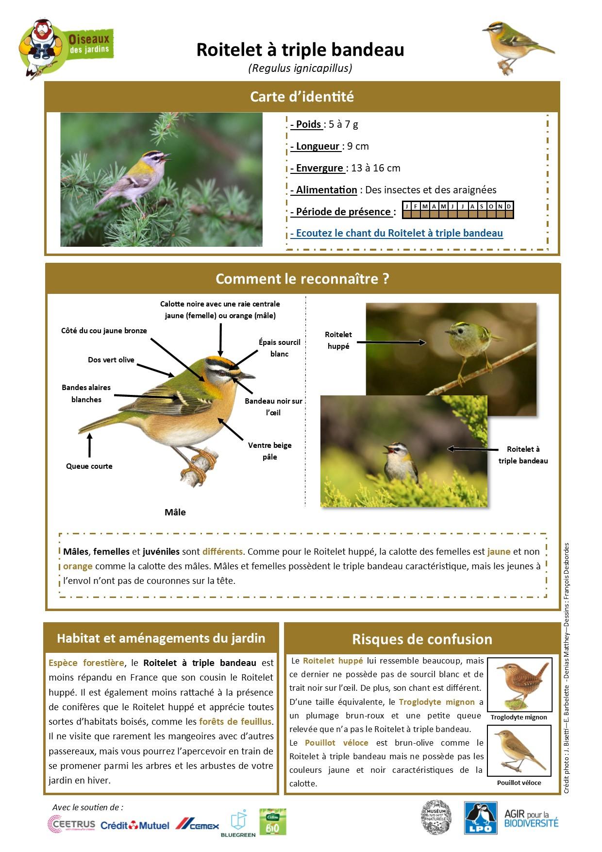 https://cdnfiles1.biolovision.net/www.oiseauxdesjardins.fr/userfiles/Fichesespces/FicheespceRTB.jpg